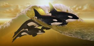 Orcas - Golden Day by LeoNeal-CP