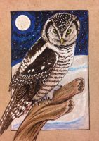 ACEO: Northern Hawk Owl by DanielleMWilliams