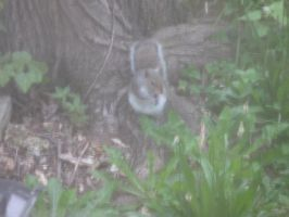 Squirrel on the ground by LW-Lucy