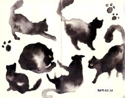 cats by soyeon2475