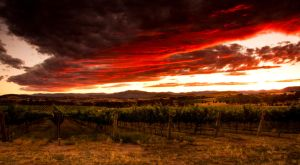 Vinyard Sunset by youwha