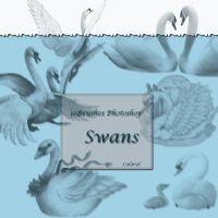 Swans by libidules