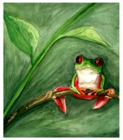 Red Eyed Frog by stuwaha