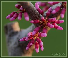 Buds 2 by chemical-mischa