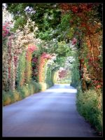 Down the lane to Five oaks by unclejuice