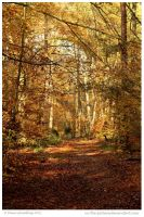 Autumn Ambience by In-the-picture