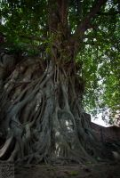 Ayutthaya: Face in the Roots by Mgsblade