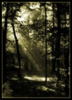 Sepia Forest by Forestina-Fotos