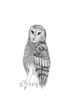 Legend of the Guardians style Barn owl by Se7J-r