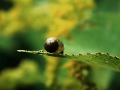 snoozing snail by a-c-tree