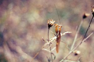 Mantid 2 by MaddLouise