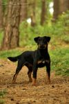 Mimmi, the Jagdterrier by SaNNaS