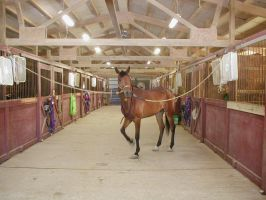 Legacy at the new barn by darchiel