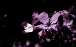 A Color's Beauty by MPhilipPhotography