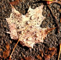 Leaf by cindy1701d