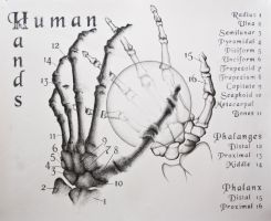 The Human Hands by tamnguyenk