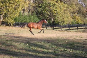 Ava galloping by equirena