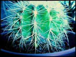 Cactus by Usherette