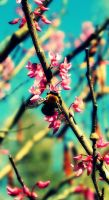 spring is here 6 by iamme2234