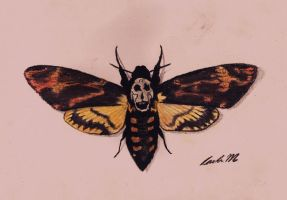 Moth by sobored89