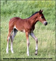 Friendly Mare Foal 2 by okbrightstar-stock