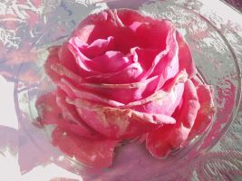Icing Rose by GraceDoragon
