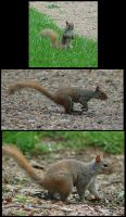 Squirrel Zip by SalsolaStock