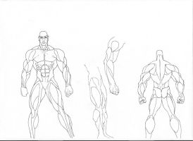 Human Anatomy - Muscles by Shindoh