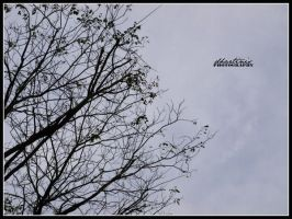 Branches Branches by dhartinis