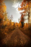 infinite autumn by kariannphotography