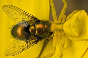 The Price of Pollen 1 by dalantech