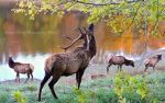 Elks by the Lake by RHCheng