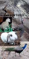 Huge Downloadable Stock Pack by VampyKit