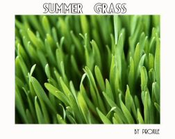 _Summer grass_ by Proxile