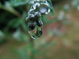 Plants 19 by stock1-2-3