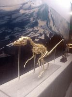velociraptor at Museum by hannay1982