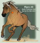 Mustang Mare Adoption 9 by JNFerrigno