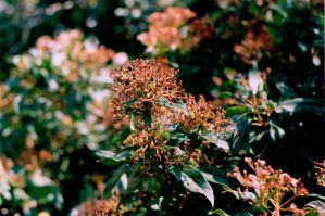 Pink Plant by sophierevell