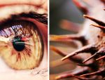 Chestnut Eye by nairafee