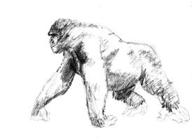 A Gorilla by Paul-Moore