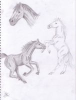 horse sketches by stargirl5286