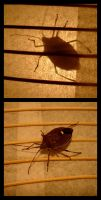 Leaf Bug in the Lamp by kayne