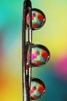 Needle with Tropical Droplets by SJohnstone