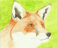 Fox '2 by Sollerion