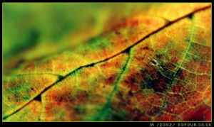 autumn light leaf by ia