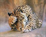 Jaguar by Efrosiny