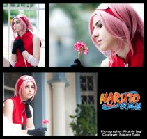 Moments of Sakura by YagiPhotography