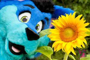 As happy as a Sunflower by FurryFursuitMaker