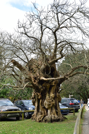 DSC 0268 Gnarled  2 by wintersmagicstock