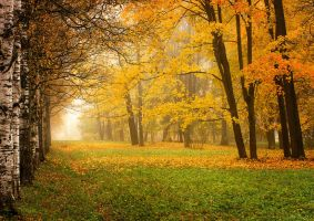 Autumn view... _35_ by my-shots
